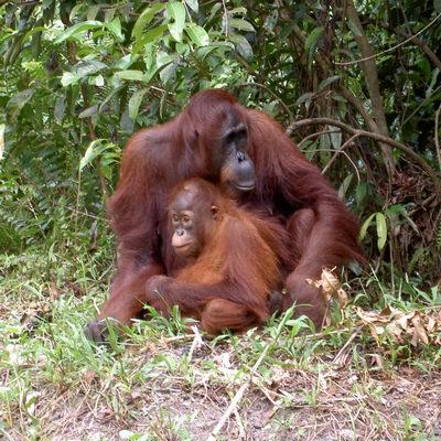 21 Indonesia memiliki 667 spesies mamalia