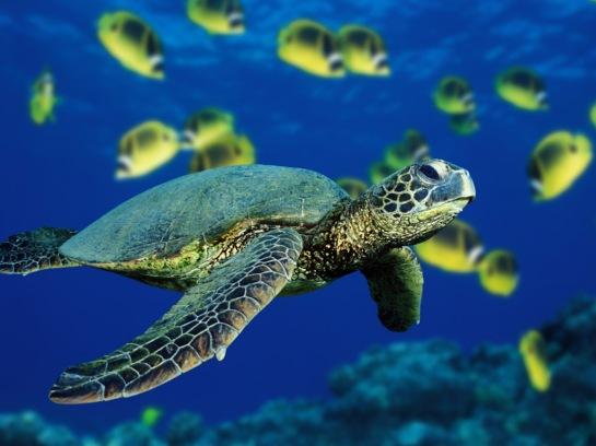 24 penyu laut Indonesia
