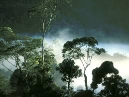 30 Hutan Tropis terbesar di dunia